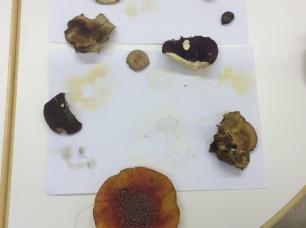 sieniä8